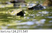 Купить «Текущая вода крупным планом и несколько камней в лесном ручейке», видеоролик № 24211541, снято 10 июля 2016 г. (c) Иванов Алексей / Фотобанк Лори