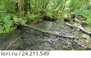 Купить «Лесной пейзаж с небольшим ручейком и поваленными деревьями», видеоролик № 24211549, снято 10 июля 2016 г. (c) Иванов Алексей / Фотобанк Лори
