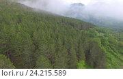 Купить «Вид с высоты птичьего полета на сосновые леса в горах», видеоролик № 24215589, снято 26 мая 2016 г. (c) Иван Кузнецов / Фотобанк Лори