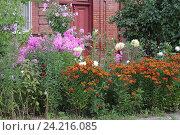 Купить «Красивый цветник на даче», эксклюзивное фото № 24216085, снято 22 июля 2016 г. (c) Ирина Водяник / Фотобанк Лори
