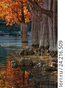 Купить «Рыжая осень», фото № 24216509, снято 2 ноября 2010 г. (c) Анна Костенко / Фотобанк Лори