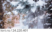 Купить «hand shaking snow from fir branch in winter forest», видеоролик № 24220401, снято 11 ноября 2016 г. (c) Syda Productions / Фотобанк Лори