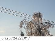 Купить «Обледеневшие электрические провода после ледяного дождя», эксклюзивное фото № 24225017, снято 15 ноября 2016 г. (c) Елена Коромыслова / Фотобанк Лори