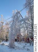 Купить «Последствия ледяного шторма. Сломанная береза упала на электрические провода», эксклюзивное фото № 24225021, снято 15 ноября 2016 г. (c) Елена Коромыслова / Фотобанк Лори
