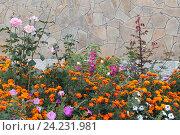 Красивый цветник на даче осенью. Стоковое фото, фотограф Ирина Водяник / Фотобанк Лори
