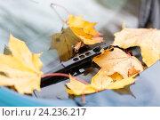 Купить «close up of car wiper with autumn leaves», фото № 24236217, снято 12 октября 2016 г. (c) Syda Productions / Фотобанк Лори