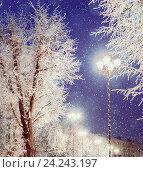 Купить «Зимний ночной пейзаж - яркие фонари среди зимних морозных деревьев и падающего снега», фото № 24243197, снято 4 октября 2018 г. (c) Зезелина Марина / Фотобанк Лори