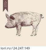 Свинья, иллюстрация в винтажном стиле. Стоковая иллюстрация, иллюстратор Irene Shumay / Фотобанк Лори