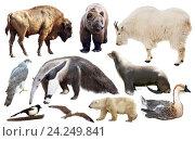 Купить «set of north american animals isolated», фото № 24249841, снято 25 мая 2019 г. (c) Яков Филимонов / Фотобанк Лори