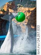 Купить «Анапский Утришский дельфинарий. Шоу морских млекопитающих», фото № 24267033, снято 6 июня 2015 г. (c) Игорь Архипов / Фотобанк Лори