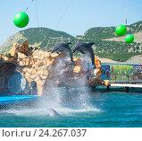 Купить «Анапский Утришский дельфинарий. Шоу морских млекопитающих», фото № 24267037, снято 6 июня 2015 г. (c) Игорь Архипов / Фотобанк Лори