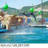 Купить «Анапский Утришский дельфинарий. Шоу морских млекопитающих», фото № 24267041, снято 6 июня 2015 г. (c) Игорь Архипов / Фотобанк Лори
