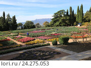 Купить «Крым. Никитский ботанический сад», эксклюзивное фото № 24275053, снято 24 октября 2016 г. (c) Яна Королёва / Фотобанк Лори