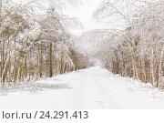 Дорога в деревню после ледяного дождя (2016 год). Редакционное фото, фотограф Дмитрий Тищенко / Фотобанк Лори