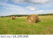 Купить «Рулоны скошенной соломы в поле», фото № 24299845, снято 10 августа 2016 г. (c) Елена Коромыслова / Фотобанк Лори