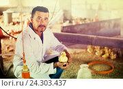 Veterinarian holding duckling on poultry farm. Стоковое фото, фотограф Яков Филимонов / Фотобанк Лори