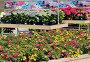 Цветы в открытом цветочном магазине, фото № 24308961, снято 5 июля 2012 г. (c) Владимир Блинов / Фотобанк Лори