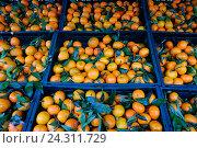 Купить «Свежие мандарины в ящиках», фото № 24311729, снято 3 декабря 2016 г. (c) Елена Криворотова / Фотобанк Лори
