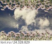 Живописные ромашки на фоне голубого неба с облаками. Стоковое фото, фотограф Бережная Татьяна / Фотобанк Лори