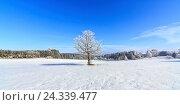Купить «Germany, Bavaria, Allgäu, Swabia, winter, snow», фото № 24339477, снято 13 апреля 2018 г. (c) mauritius images / Фотобанк Лори