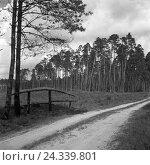 Купить «Im Wald um Nikolaiken in Masuren in Ostpreußen, Deutschland 1930er Jahre. In the forest around Nikolaiken in Masuria in East Prussia, Germany 1930s.», фото № 24339801, снято 19 июля 2018 г. (c) mauritius images / Фотобанк Лори