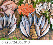 Купить «Разнообразные сорта рыбы на прилавке рыбного магазинчика в Стамбуле. Турция.», фото № 24365913, снято 25 декабря 2014 г. (c) Истомина Елена / Фотобанк Лори