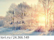 Купить «Winter landscape - snowy winter trees in the winter forest at the sunset with sunlight beams», фото № 24366149, снято 20 марта 2019 г. (c) Зезелина Марина / Фотобанк Лори