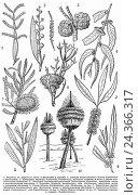 Типичные растения австралийской области. Стоковая иллюстрация, иллюстратор Макаров Алексей / Фотобанк Лори