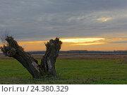 Купить «Evening mood in the broad landscape of the Western Pomerania Lagoon Area National Park, Mecklenburg-Western Pomerania, Germany», фото № 24380329, снято 17 июля 2018 г. (c) mauritius images / Фотобанк Лори