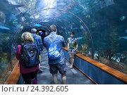 Подводный стеклянный тоннель в аквариуме зоопарка Лоро парк. Пуэрто де ла Круз (Puerto de la Cruz), Тенерифе, Канарские острова, Испания (2016 год). Редакционное фото, фотограф Кекяляйнен Андрей / Фотобанк Лори