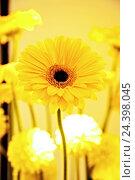 Купить «Flower, vase, yellow, gerbera,», фото № 24398045, снято 16 августа 2018 г. (c) mauritius images / Фотобанк Лори
