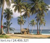 Купить «The Dominican Republic, Punta del Rey, straw hut on the beach, palms, sea», фото № 24406321, снято 29 января 2009 г. (c) mauritius images / Фотобанк Лори