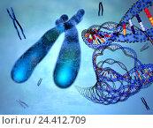 Купить «DNA, X-Cromosomen, Composing, Desoxyribonucleinsäure, DNA, X-Cromosom, genotype, genetic information, DNA ropes, biology, Geschlechtscromosom, hereditary factor, support», фото № 24412709, снято 15 апреля 1994 г. (c) mauritius images / Фотобанк Лори