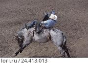 Купить «Canada, Alberta, rodeo, cowboy, horse, motion, Prärieprovinz, tradition, event, show, ride, man, event, arena, Sand, Bronc-riding, aggressively, wildly, dangerously», фото № 24413013, снято 23 июля 2002 г. (c) mauritius images / Фотобанк Лори