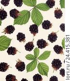 Купить «Blackberries, leaves fruits, fruit, berries, eatable, Rubus spec.», фото № 24415381, снято 31 января 2001 г. (c) mauritius images / Фотобанк Лори
