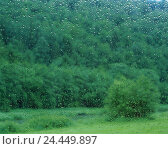 Купить «Window pane, wet, view, wood, window, windowpane, drop water, raindrop, wet from rain, water, park, park, plants, nature, habitat, ecology, green», фото № 24449897, снято 24 октября 2005 г. (c) mauritius images / Фотобанк Лори