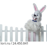 Купить «Fence, Easter bunny, leans,  Half portrait  Hare, Easter, Easter, child beliefs, disguise, disguises, outfit, hare outfit, humor, fun, merrily, kindly...», фото № 24450841, снято 18 сентября 2018 г. (c) mauritius images / Фотобанк Лори