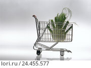 Купить «Shopping carts, fennel, outsize, studio, shopping, purchasing, basket goods, vegetables, oversized, unnaturally, icon, food, eat, genetic-manipulated, genetic engineering, Still life», фото № 24455577, снято 1 августа 2001 г. (c) mauritius images / Фотобанк Лори
