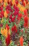 Цветущие клумбы в парке, фото № 24461617, снято 1 декабря 2016 г. (c) Алексей Кузнецов / Фотобанк Лори