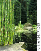Купить «Japanese garden, pond, bamboo    Park, garden, grounds, water, shores, stone, rocks, bamboo tube, bamboo plants, green, vegetation, nature, park, park...», фото № 24471085, снято 13 ноября 2018 г. (c) mauritius images / Фотобанк Лори