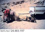 Купить «Egypt, Sinai, stone desert, vehicle, camel, exhausts, bound, desert, dryness, car, pick-up, dromedary, beast burden, fatigue, depletion, rest, relax, captivity, suppression», фото № 24483197, снято 2 декабря 2005 г. (c) mauritius images / Фотобанк Лори