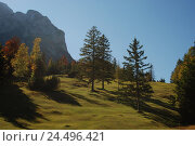 Купить «Germany, Bavaria, mountain pasture, trees, Wetterstein Range, autumn, Upper Bavaria, Werdenfels, scenery, nature, Idyll, mountains, alps, mountain, Gamsanger...», фото № 24496421, снято 29 февраля 2008 г. (c) mauritius images / Фотобанк Лори