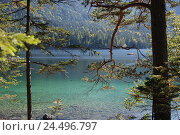 Купить «Germany, Bavaria, Eibsee, boots, shores, trees, Upper Bavaria, Werdenfels, lake, mountain lake, lakeside, conifers, jaws, water, clearly, turquoise, pedal...», фото № 24496797, снято 29 февраля 2008 г. (c) mauritius images / Фотобанк Лори