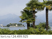 Купить «Italy, Baveno, Lago Maggiore, lake, Borromäische island, Isola Bella,», фото № 24499925, снято 24 ноября 2009 г. (c) mauritius images / Фотобанк Лори