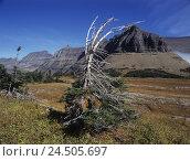 Купить «The USA, Montana, Glacier national park, scenery, mountains, tree, crooked,», фото № 24505697, снято 1 июля 2009 г. (c) mauritius images / Фотобанк Лори