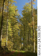 Купить «Deciduous forest, forest way, autumn, wood, trees, broad-leaved trees, Buchenwald, forest way, footpath, way, foliage, leaves, autumn staining, autumn...», фото № 24508905, снято 12 марта 2008 г. (c) mauritius images / Фотобанк Лори