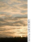 Купить «Wood, sunrise, cloudy sky, trees, heavens, clouds, the morning sun, morning light, mood, rest, silence, morning mood, red sky, tree tops, nature, day beginning, mood, copy space,», фото № 24519901, снято 3 февраля 2010 г. (c) mauritius images / Фотобанк Лори