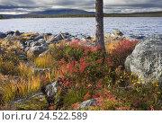 Купить «Norway, Hedmark, Femundsmark, Femund national park, lakeside, autumn,», фото № 24522589, снято 15 сентября 2009 г. (c) mauritius images / Фотобанк Лори