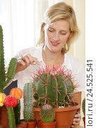 Купить «Woman, young, houseplants, cactuses, barrel cactus, Ferocactus, touches,», фото № 24525541, снято 18 сентября 2018 г. (c) mauritius images / Фотобанк Лори