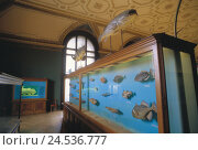 Купить «Austria, Vienna, nature-historical, museum, ichthyology, Europe, town, capital, place of interest, culture, inside, exhibit, Ichthyologie, exhibits, showcase, fish,», фото № 24536777, снято 4 июля 2008 г. (c) mauritius images / Фотобанк Лори